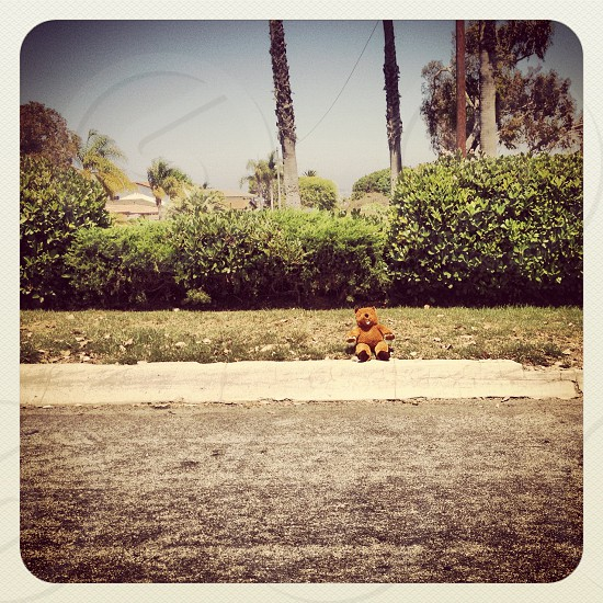 hitchhiking teddy-bear photo