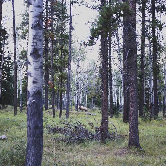 green long thin tree photo