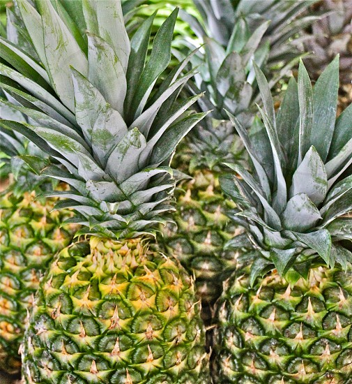 6 pineapple fruits selective focus photography photo