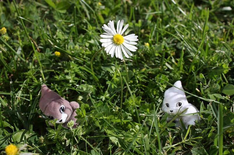 bunny rabbit small tiny daisy photo