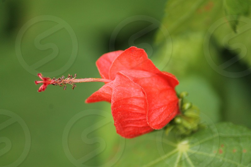 Flower closeup.  Nature. photo