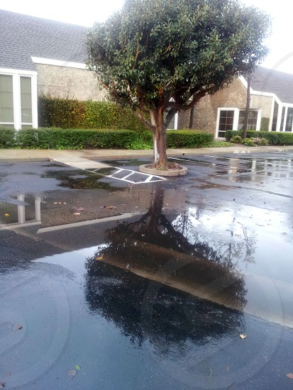 Tree Reflected in a Puddle photo