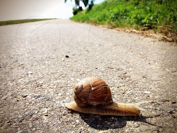 Snail traffic... photo