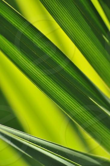 Minimal plant texture photo