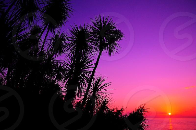 sunrise over sea and palm trees photo