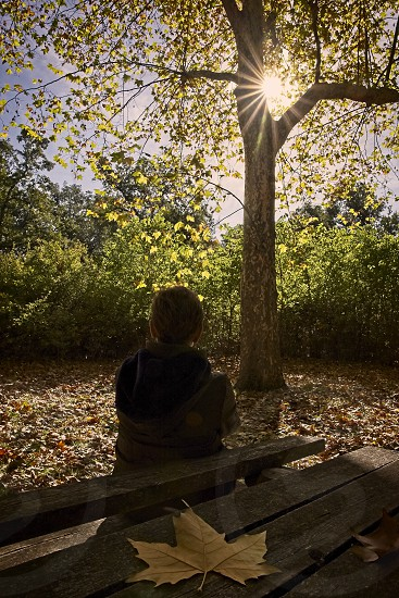 Woman sitting on a bench contemplates the sun shining on a tree in autumn photo
