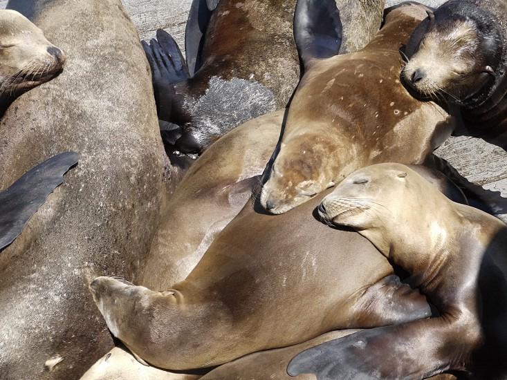 sea lions photo