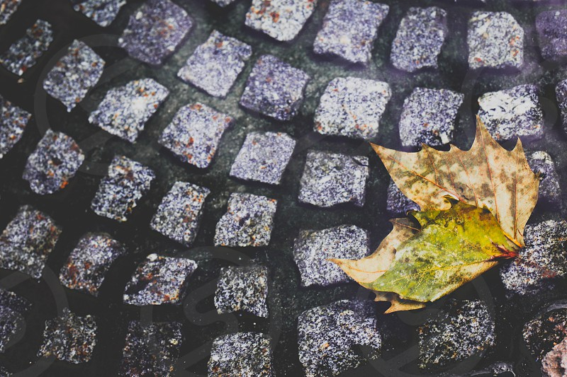 green linden leaf on grey stone pavement photo