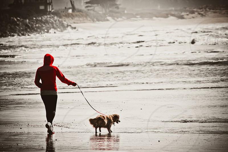 Walking dog photo