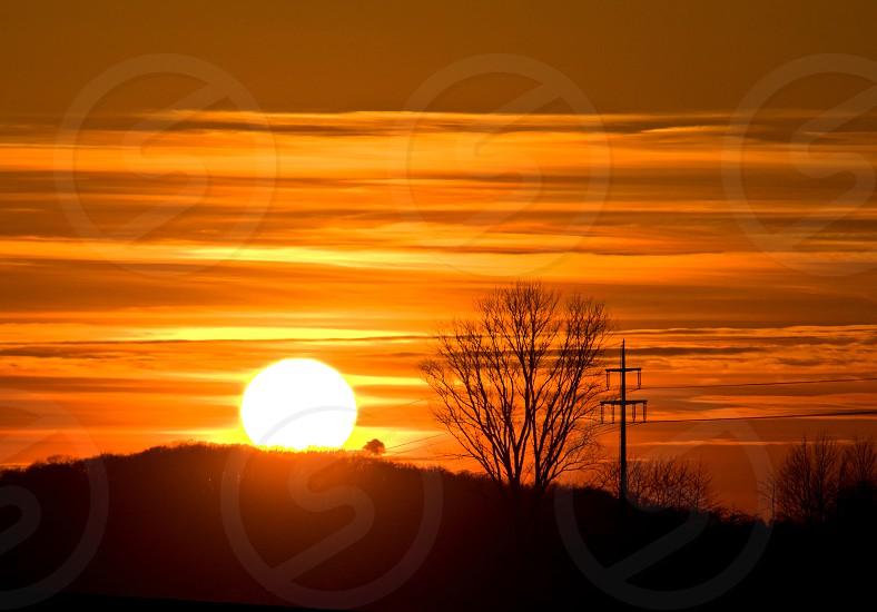 sunset with bush and power mast photo