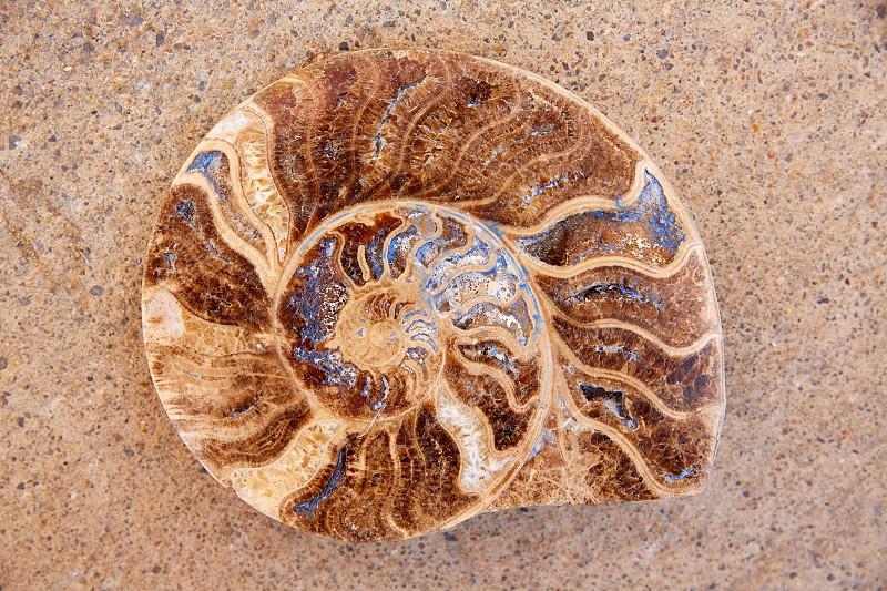 Ammonites fossil snail cut found in Teruel Sierra Albarracin of Spain photo