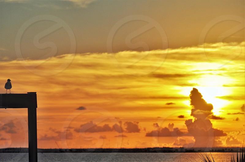 Seagull & sunset photo