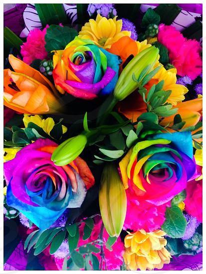 Rainbow coloured roses. photo