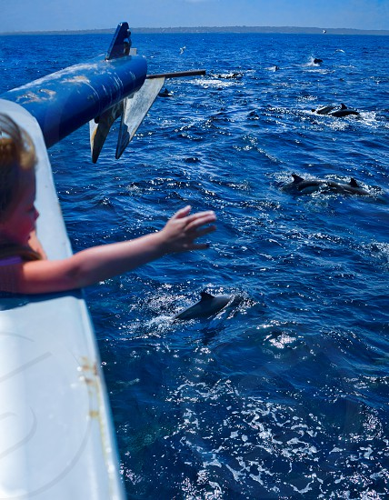 The Dolphin Charmer. Aboard a whale watching boat we were fortunate enough to come across a super pod of hundreds of Common Dolphins. photo