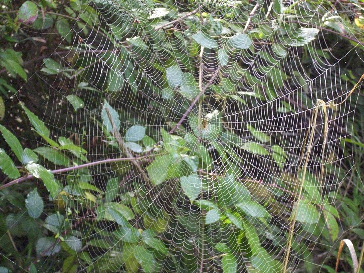 That is one big spider web photo