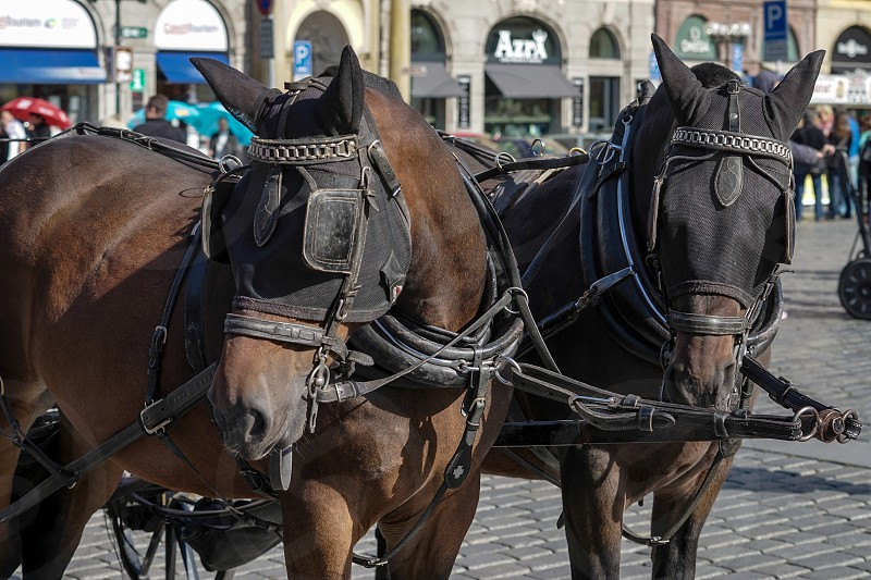 Horses in the Old Town Square in Prague photo