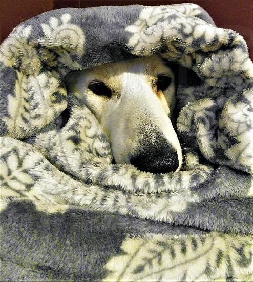 Snuggle Buddy photo