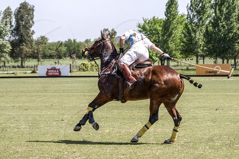 Polo game challenge horse field jockey club run photography photographer motion sharp clarity photo