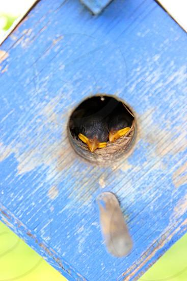 Sleeping baby birds in nest Glen Burnie MD photo
