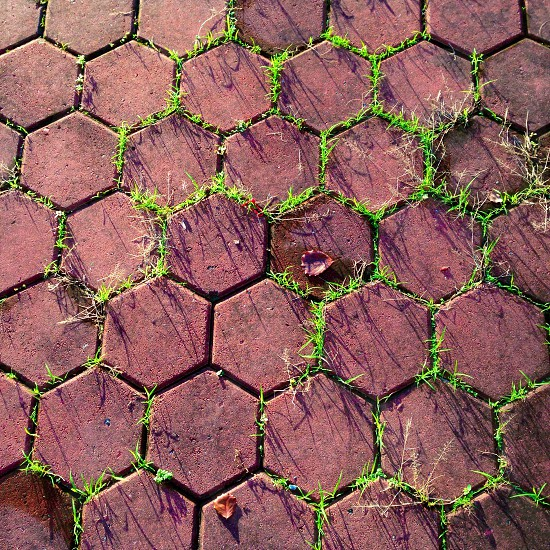 brown clay hexagon shaped pathway tiles photo