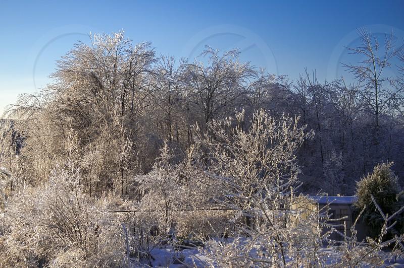 Winter Ice Storm photo