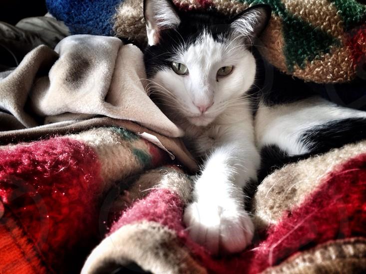 Cat nap photo