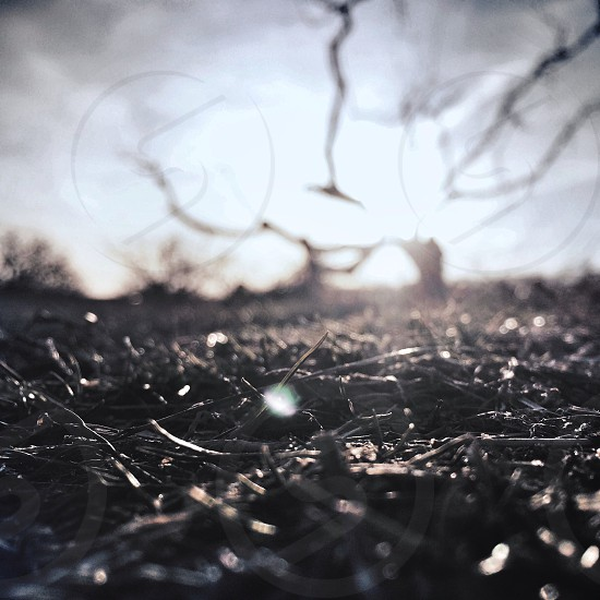 black dried grass photo