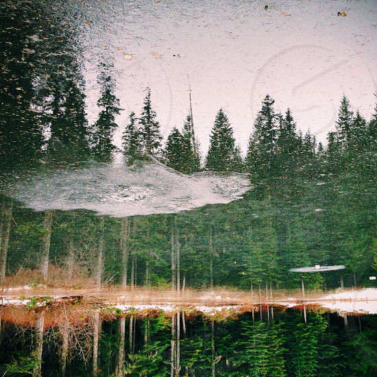 green pine trees water reflection photo