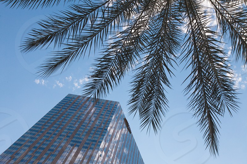 A palm tree and tall hotel in a skyscape. photo