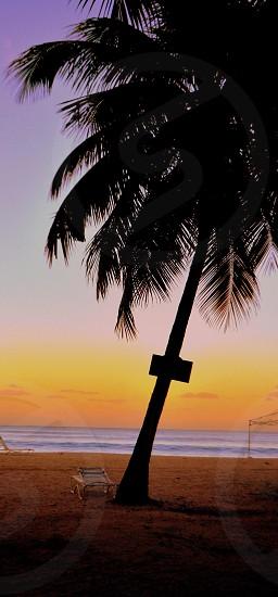 lounge chair under palm tree near beach shore photo
