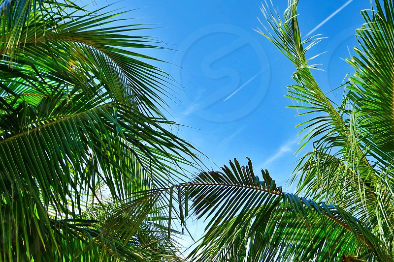 #blue sky #clear sky #coconut tree #trees #summer #weather #background photo