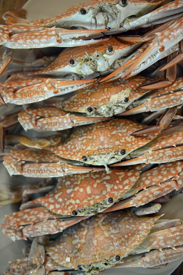 Crab seafood at the day Market in the city of Phuket on the Phuket Island in the south of Thailand in Southeastasia. photo