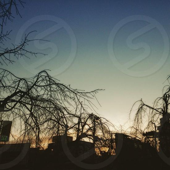 sunriseJapan photo