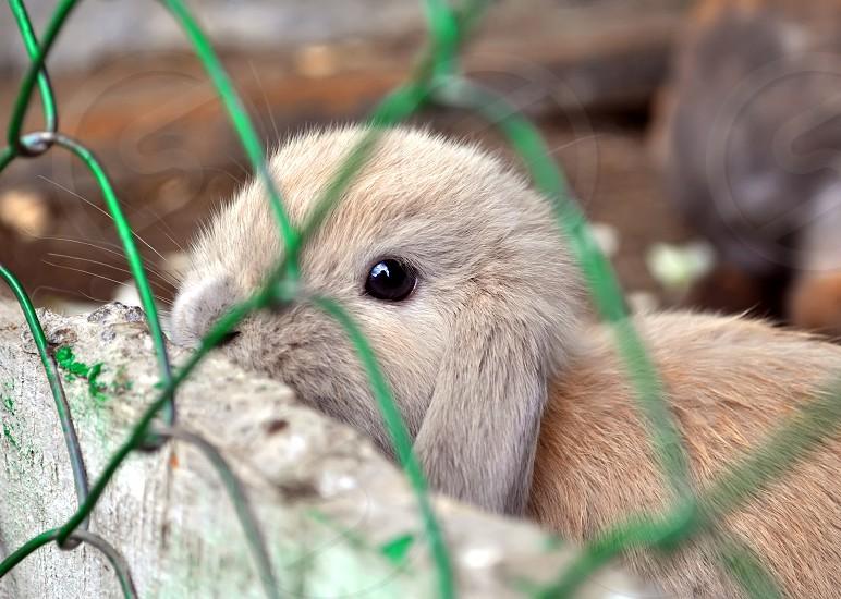 little bunny photo
