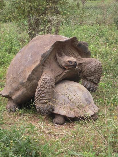 grey tortoise photo
