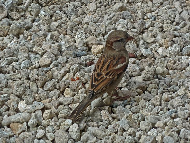 Bird on the rocks photo