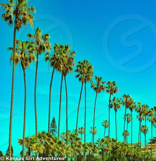La Jolla Cove San Diego California. #lajollacove #sandiego #california #palmtrees #nature #scenery  photo