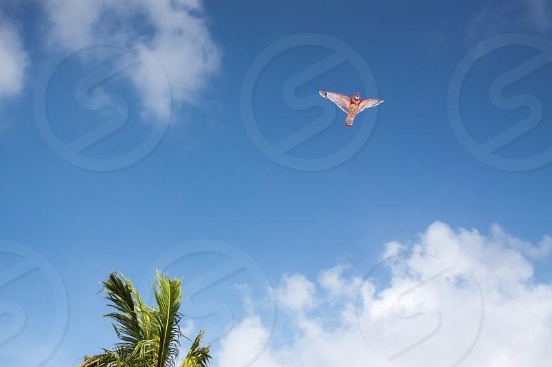 Bird-shaped kite in the blue sky photo