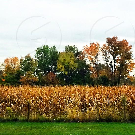 Harvest season is here.  photo