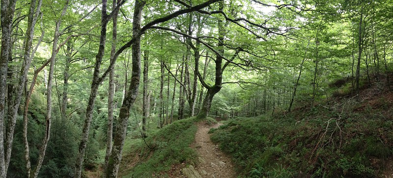 forest nature green color colorful travel trip torism path route lantern beech wet moss damp dampness trekking photo