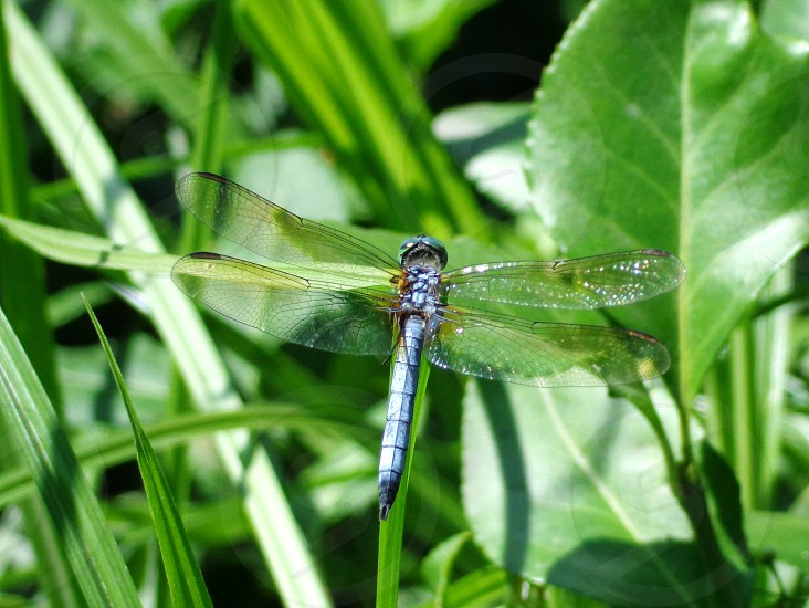 dragonfly insect photo