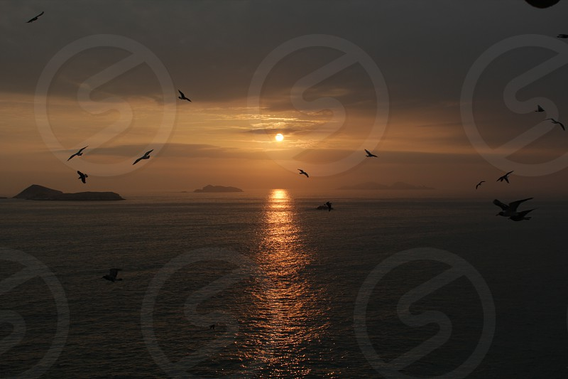 A Sunset full of birds photo