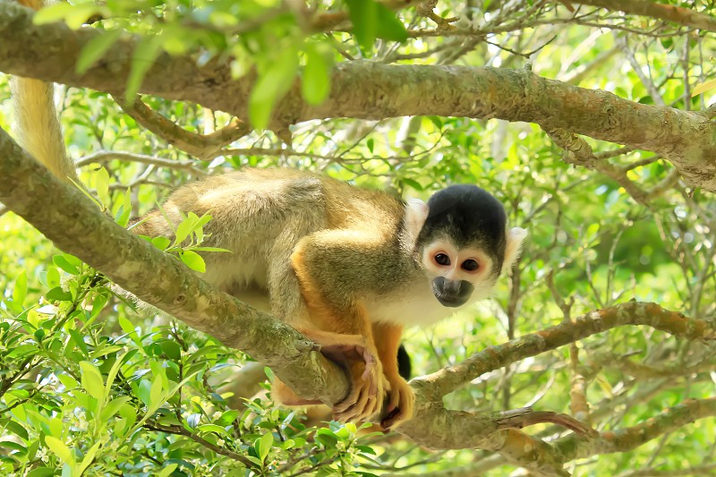 gray and black monkey on tree branch photo