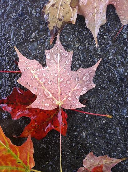 Autumn leaves and rain photo