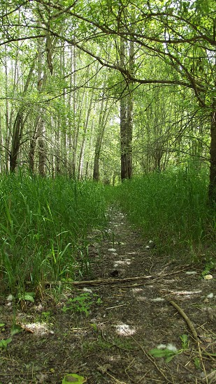 Follow the trail! photo