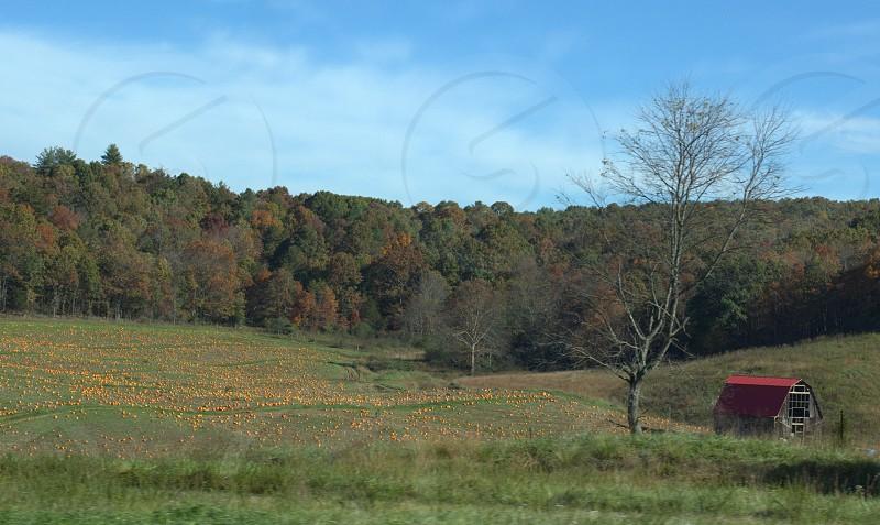 pumpkin patch rural countryside photo