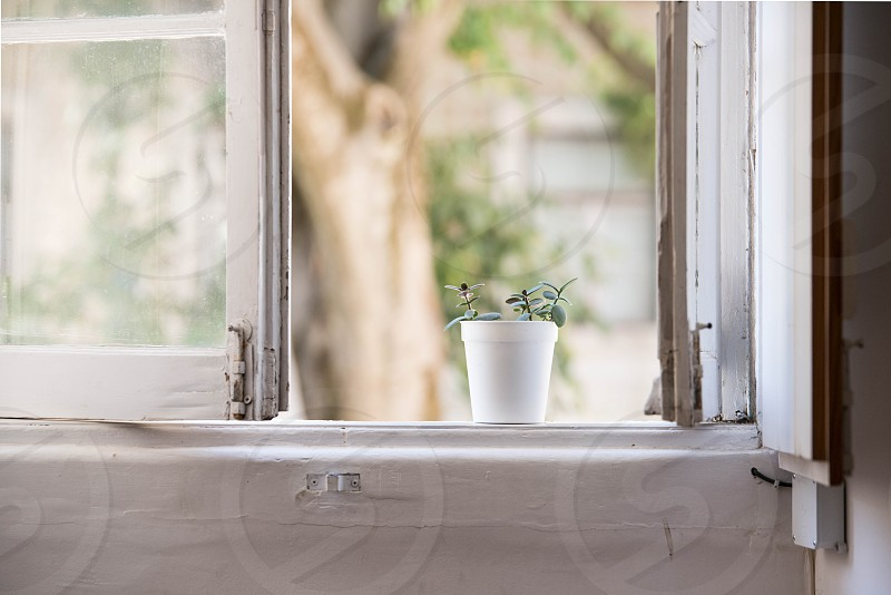 Lisboa Lisbon Portugal plant art old antique vintage window workshop atelier studio view morning peaceful quiet  green grow growth pot potted raise succulent photo