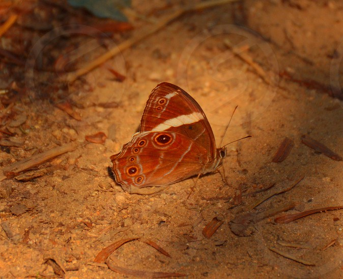 butterfly in autumn photo