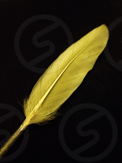yellow feather photo