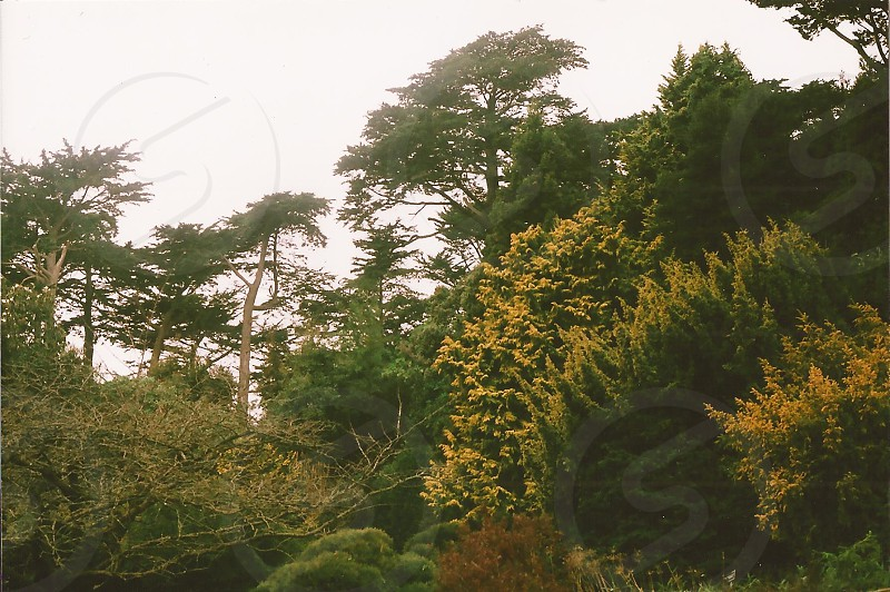 green tall trees photo
